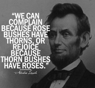 rose bushes abe
