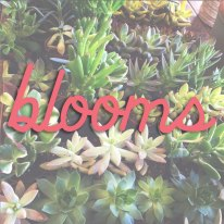 blooms